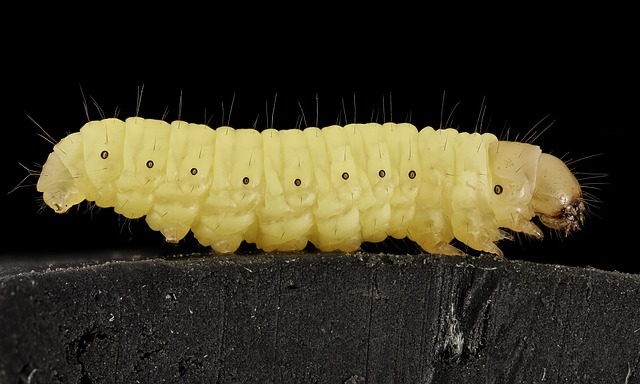 Baby Moth Pictures
