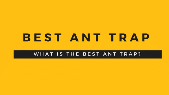 Best Ant Traps Review