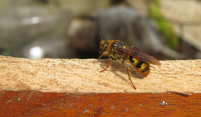 What do yellow jackets eat
