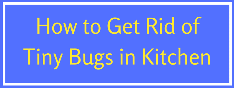 get rid of tiny black bugs