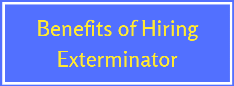 Why you should hire exterminator