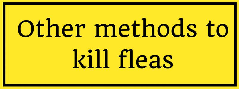 killing fleas with lemon juice