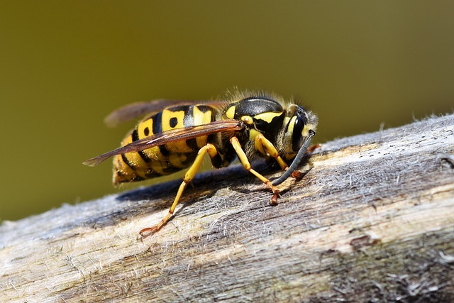 How to use soapy water on wasps and hornets