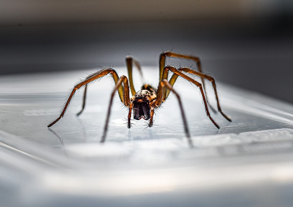 do spiders poop