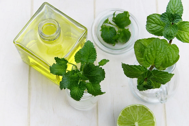 peppermint for bugs in kitchen