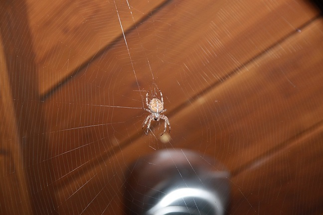 spider web in house