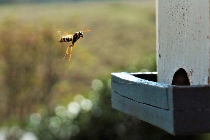 wasp exterminator cost