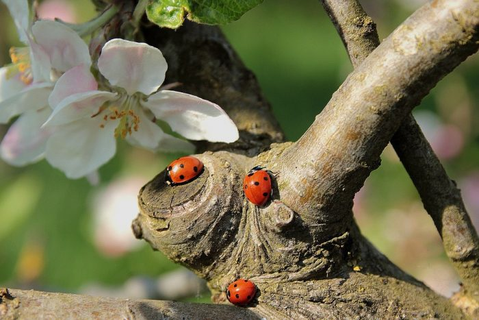 toads eat lady bugs