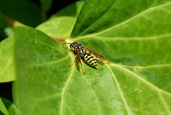 soapy water for wasps