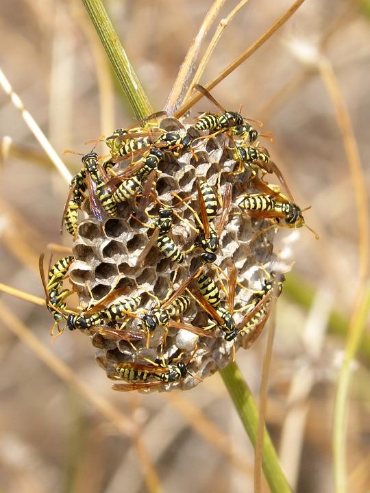 do wasp sleep at night