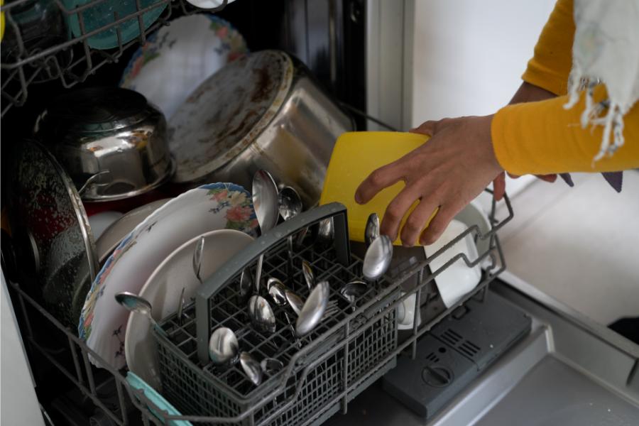 roach-in-dishwasher
