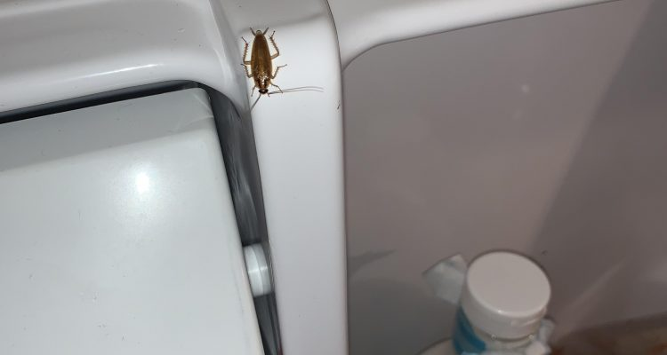 roaches in refrigerator